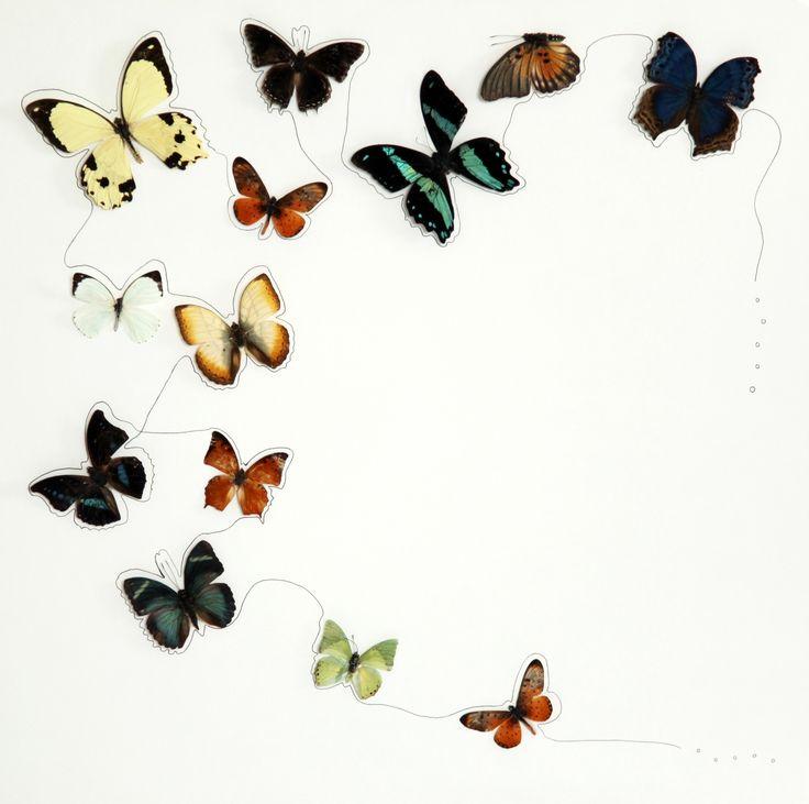 Fly baby Fly! - 2013 - butterfly, pen, 500*500