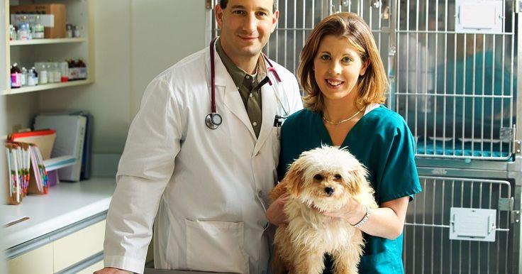 Como identificar e tratar a pneumonia aspirativa em cães. Muitos donos de cães ficam alarmados quando seu animal de estimação começa a tossir e aparenta ter problemas respiratórios. Esses são sintomas de pneumonia aspirativa, uma doença que provoca uma inflamação nos pulmões e afeta cães de todas as raças e idades.