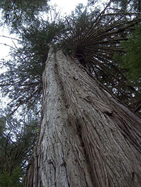 Pacific Rim National Park, BC, Canada