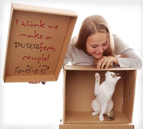 Cat Sadie Hawkins Dance Proposal
