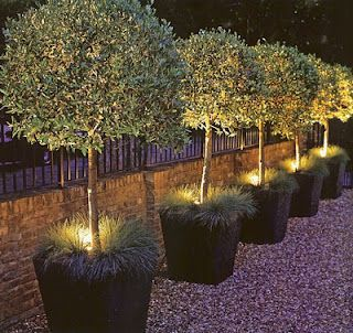 Love the lights inside the plants/trees! This would look so cool in the backyard behind the seating surrounding the firepit!