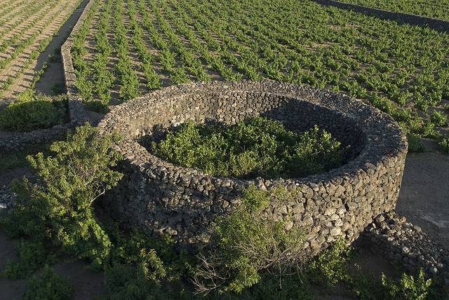 Giardino Pantesco Donnafugata - Pantelleria, Sicily