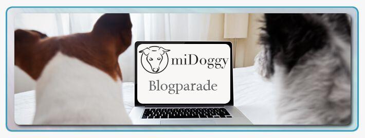 Kann Dein Hund alleine zuhause bleiben? Ein Erfahrungsbericht und Tipps wie man es schafft, dass der Hund alleine bleibt. Hundetraining ✓
