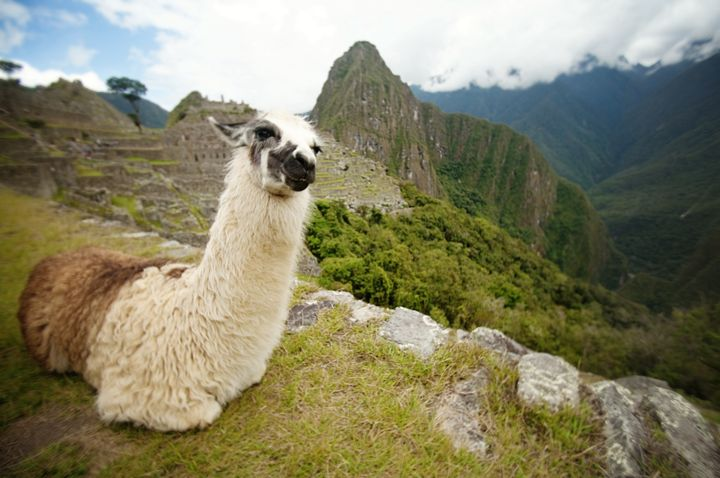 8 Ways NOT to do Machu Picchu - Rookie Mistakes No One Should Make Traveling to Peru's Royal Estate
