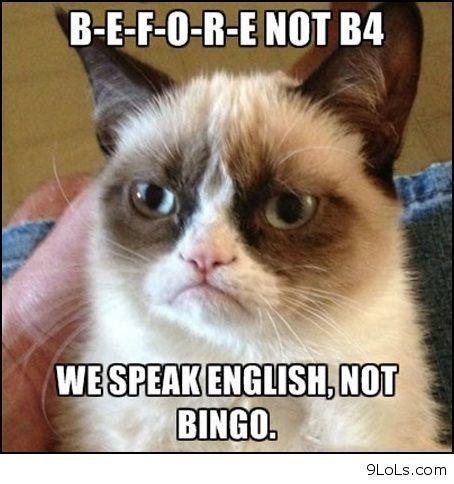 Grumpy cat and bingo