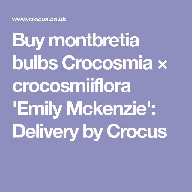 Buy montbretia bulbs Crocosmia × crocosmiiflora 'Emily Mckenzie': Delivery by Crocus