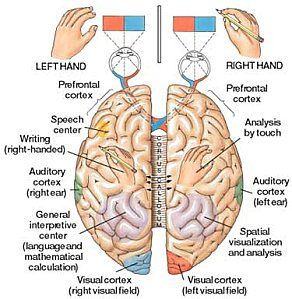 In children with dyspraxia, the two hemispheres of the cerebral cortex are not working in harmony to produce the desired results.