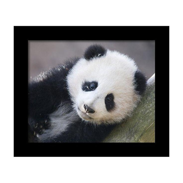 Panda Cub T Shirt HEAT PRESS TRANSFER for T Shirt Tote Sweatshirt Fabric  #226