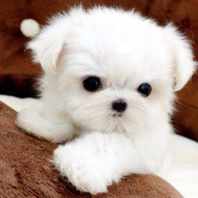 aw: Puppies, Dogs, Sweet, Adorable Animals, Pets, Puppys, Box, Baby, Things