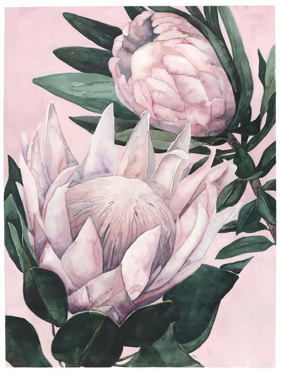 King Proteas On Pink Background Etsy Protea Art Flower Painting Flower Art