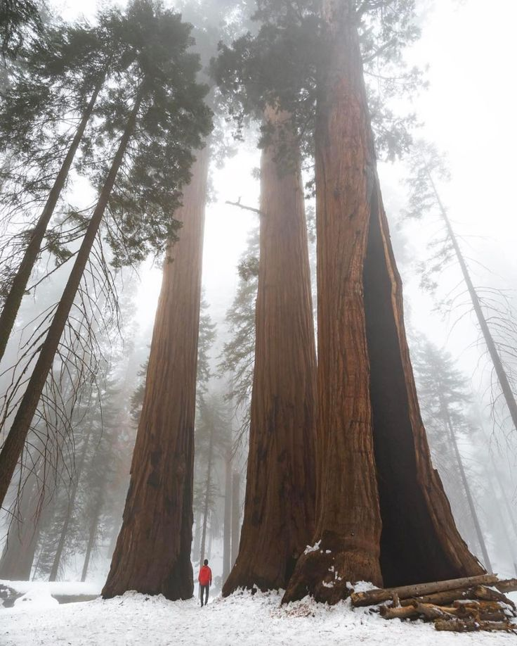 Sequoia National Park | Pinpanion