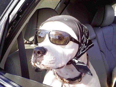 Fotos de perros y animales graciosos