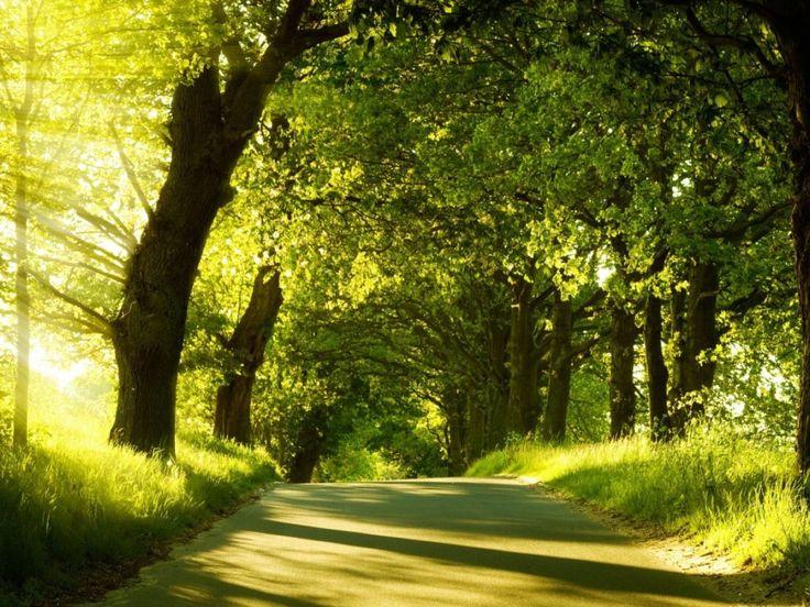Download Green Nature Dual Monitor Wallpaper Free Wallpaper on dailyhdwallpaper.com