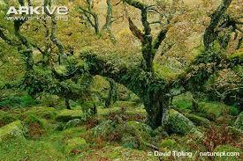 Znalezione obrazy dla zapytania how to make your own tree-fern