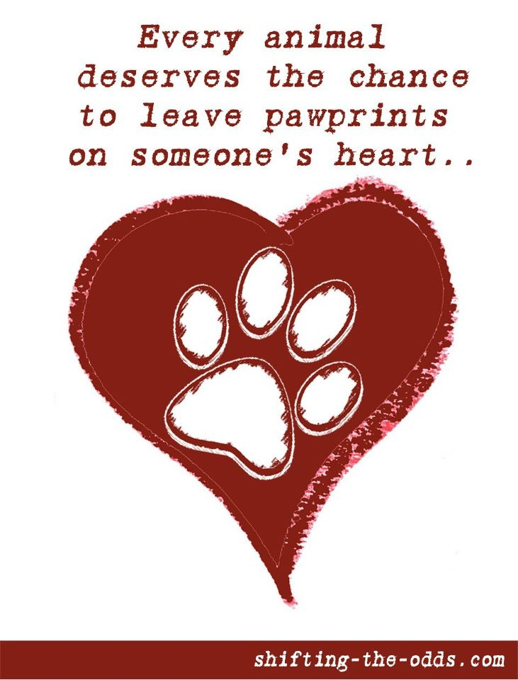 25  best animal rescue quotes on pinterest