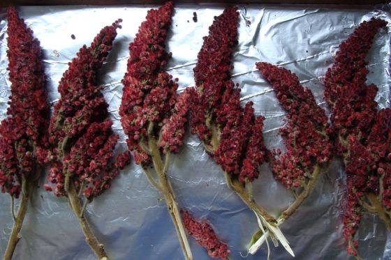 sumac # corn chocolate shavings sumac buttered corn see more 1 ...