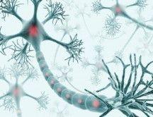 celulas-neuronas