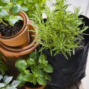 quelles plantes aromatiques choisir pour la cuisine autour de la plancha eno pinterest. Black Bedroom Furniture Sets. Home Design Ideas