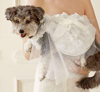 Planning a fur-kid-friendly wedding? You've got us to provide some handy tips for the big day.