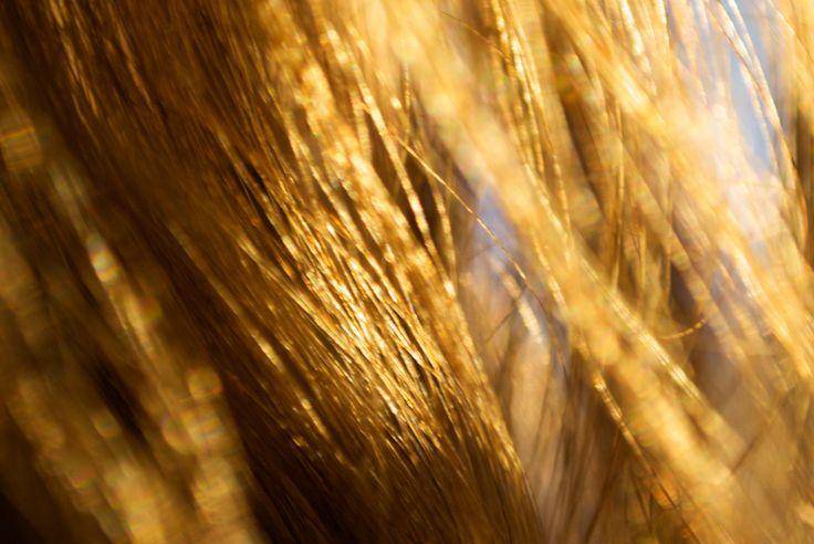 Jak domowymi sposobami poprawić jakość włosów? Aby mieć piękne włosy należy nie tylko je myć ale i używać odżywek. Dobrze olejować włosy. Można stosować zioła.