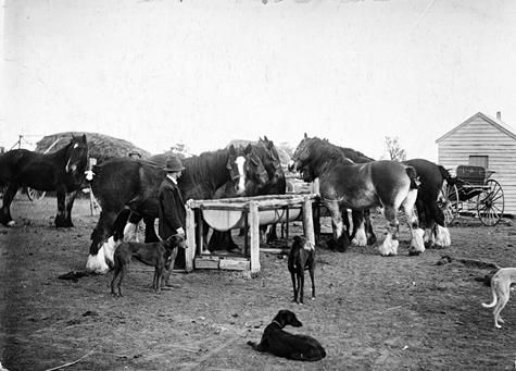 Hugh McGregor & George Byrne, watering horses at a trough, c1935, Wimmera