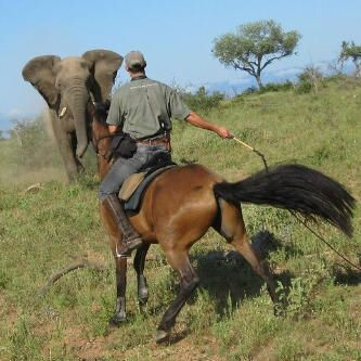Horse Safari South Africa