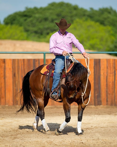 """Training Tip of the Week:  Establish a foundation before taking your horse on the trail. """"A horse has to be respectful, calm and using the thinking side of his brain in the arena (or a controlled environment) before he will behave the same on the trail."""": Riding Exercise, Clinton Anderson, Horses Training, Better Rider, Training Tips, Horses Stuff, Ridinger Training, Horses Fancy, Control Environment"""
