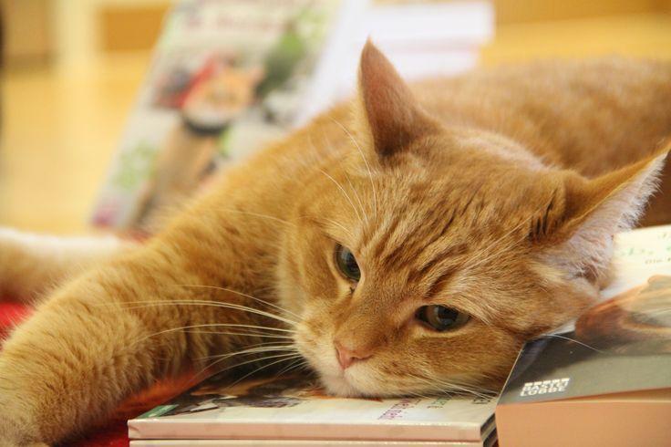 Bob ruht sich auf seiner Arbeit aus. Im wahrsten Sinne des Wortes. © Bastei Lübbe
