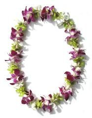 Mixed Single Strand Orchid Lei | Buy Graduation Leis