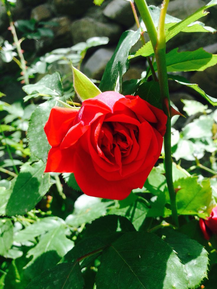 My favourite flower