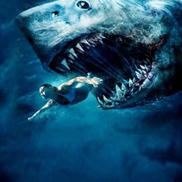Shark? Where?