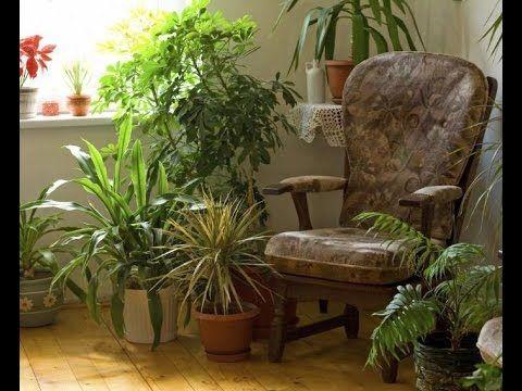 Комнатные растения, которым не нужен солнечный свет - Полезные Советы