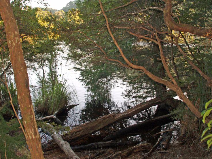 Walking along the Pieman River Corinna