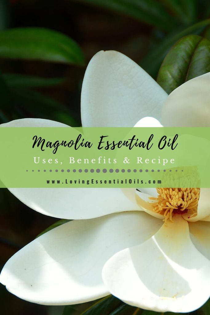 Magnolia Essential Oil Uses Benefits Recipes Eo Spotlight In 2020 Vetiver Essential Oil Essential Oil Uses Essential Oils Work