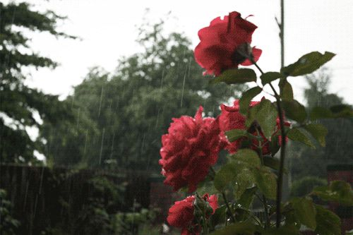 Layer any song with rain sounds to make it that much more peaceful. | 13 Simple Hacks For Enjoying Music So Much More
