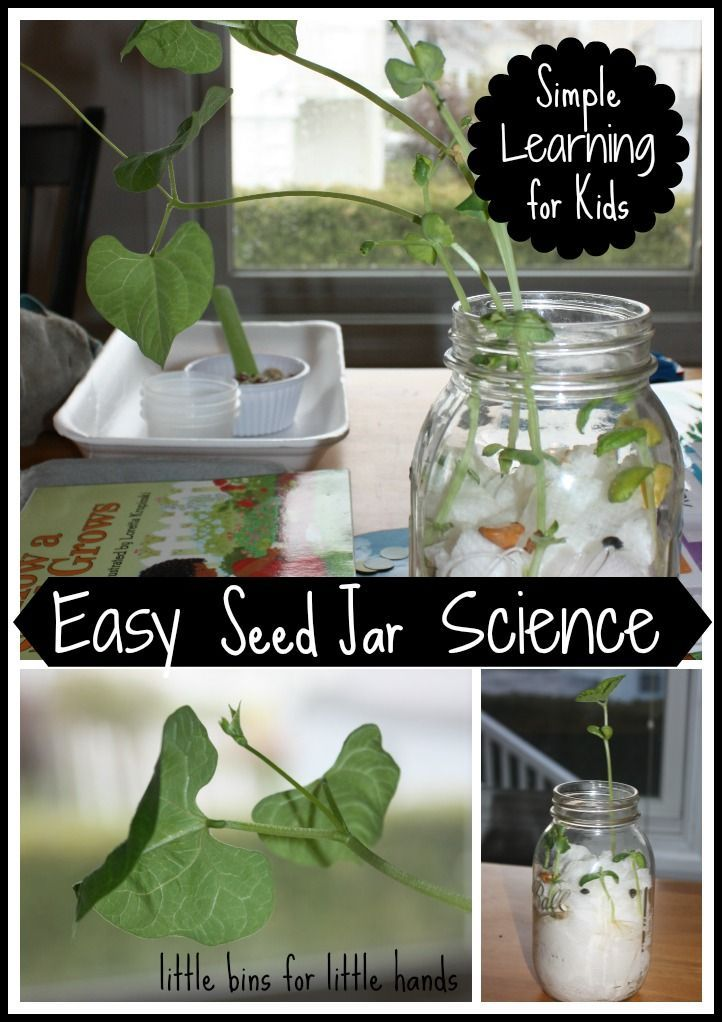 Seed Jar Science Experiment For Kids