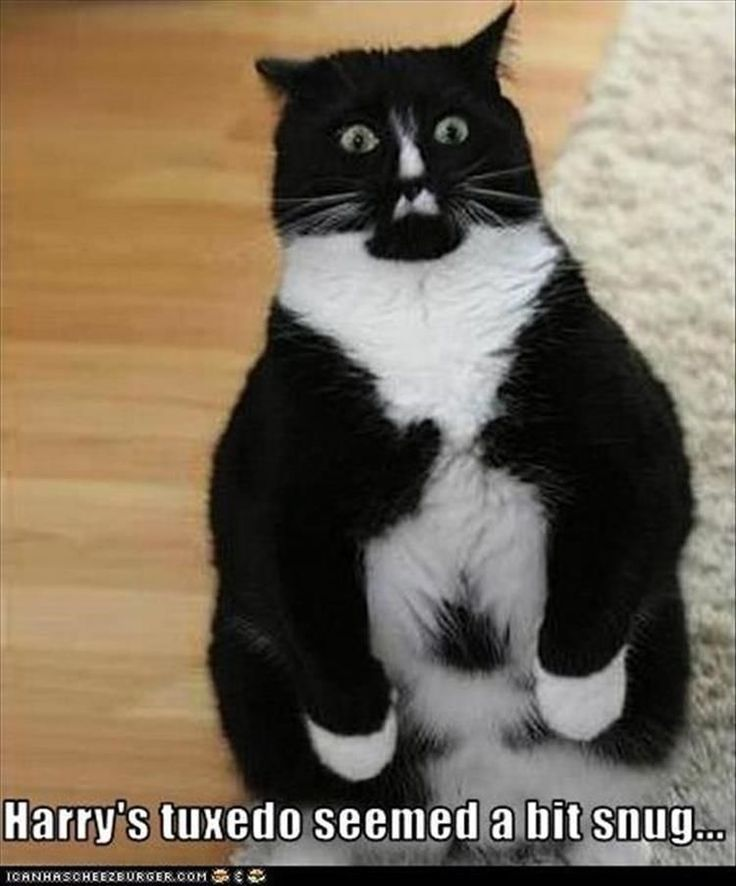 Funny Animal Pictures Of The Day - 21 Images