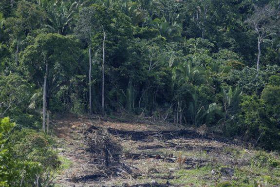 Não há nível de desmatamento seguro para o clima na Amazônia. A destruição da floresta interfere altera até a incidência de chuvas em todo o continente.