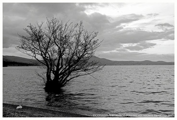 The tree - www.polliniphotolab.com