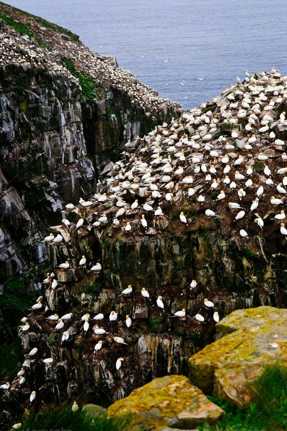 Cape St. Mary's Ecological Bird Sanctuary In Newfoundland