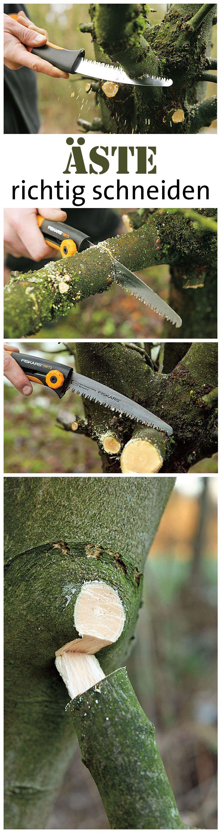 Einen Ast kann man selbst vom Baum entfernen. Dabei geht man in kleinen…