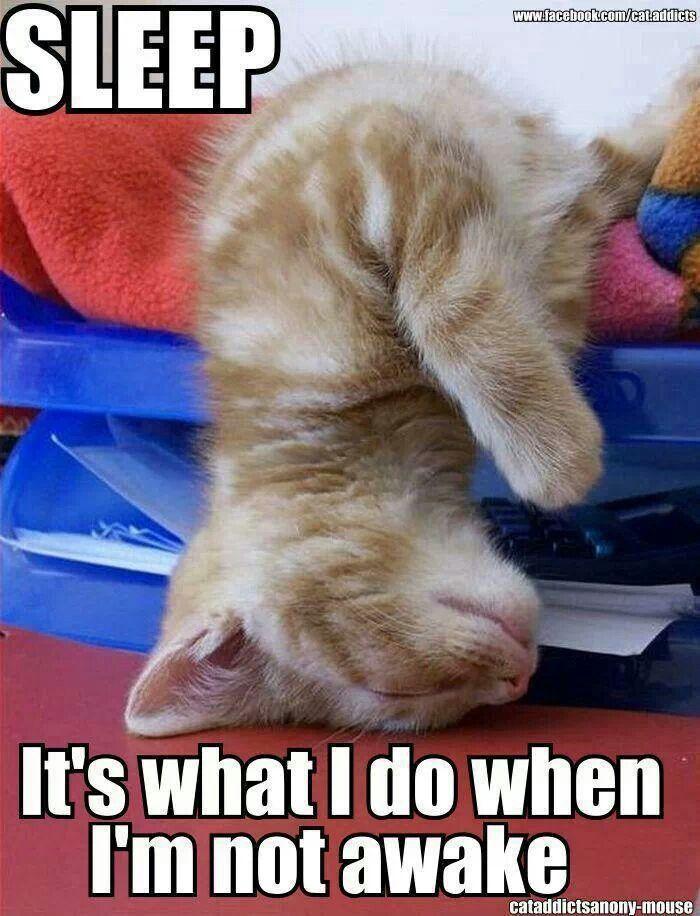 25597329d6e0b45fe7f04e6a1f7dc8e0 funniest pictures funny animal pictures 88 best i love sleeping images on pinterest i love sleep,Chronic Illness Cat Meme