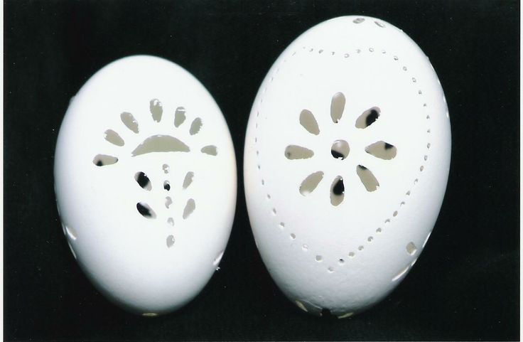 Goose eggs perforated