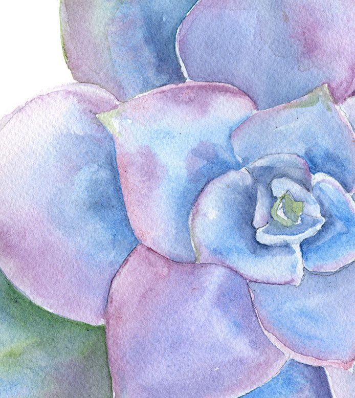 Blue Succulent Watercolor. Susan Windsor