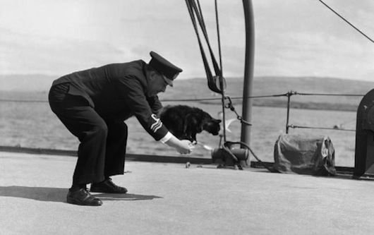 """Unsinkable Sam"" known to the Germans as ""Oscar"" was a cat that served on 3 warships (one German and two British) all of which sank in action. The cat survived each sinking, floating away on wooden planks to rescue."