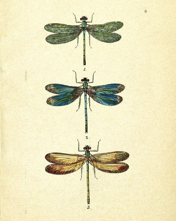Vintage Libelle Kunstdruck digitale Grafiken von PatiHomeDecor