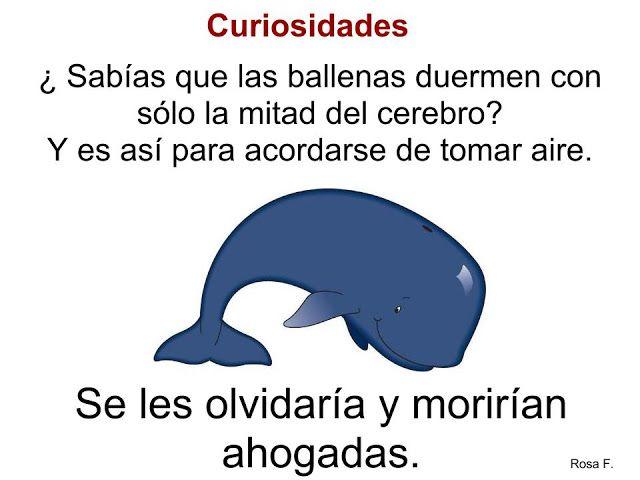 Ballenas  fichas     http://rosafernandezsalamancainfantil.blogspot.com.es/2013/03/las-ballenas-caracteristicas.html