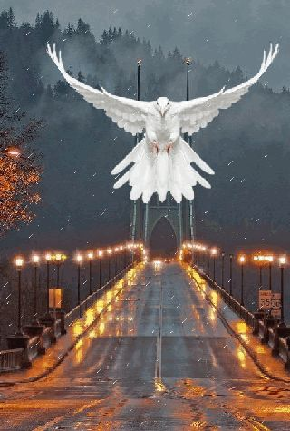 Just like the dove I saw all the way to the Hospital where Julain was dying... NolaWest**********