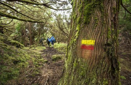 PRC1TERMistérios Negros - Mapas e GPS - Percurso Pedestre na Terceira - Trilhos dos Açores