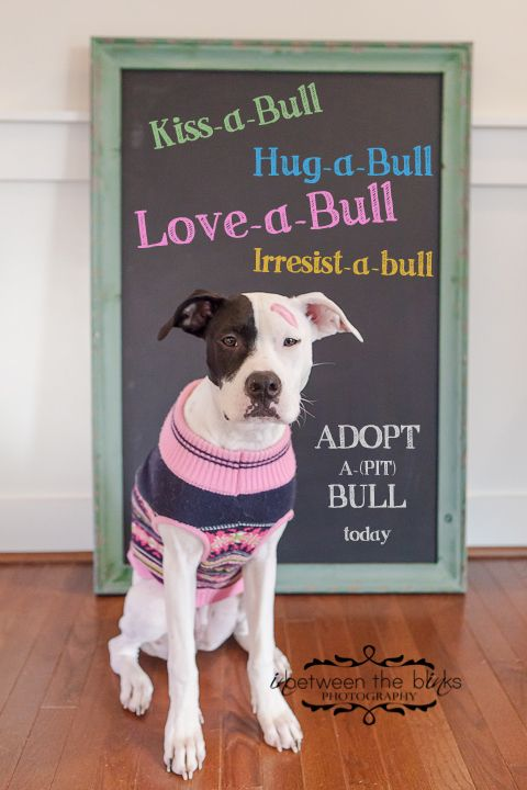 Adopt a pitbull poster - Raleigh Pet photographer, pet adoption, pit bulls, SPCA #adoptdontshop #pitbull
